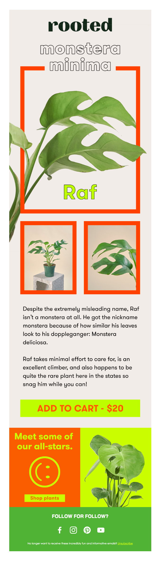 your-mini-monstera-is-here